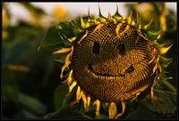 Napra mosolygó