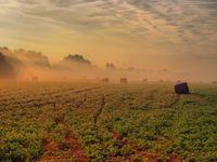 Reggeli köd II.