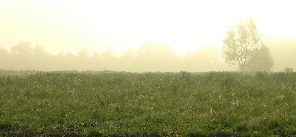 nyári ködben