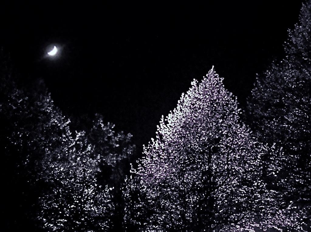 Holvilágos éjszakán...