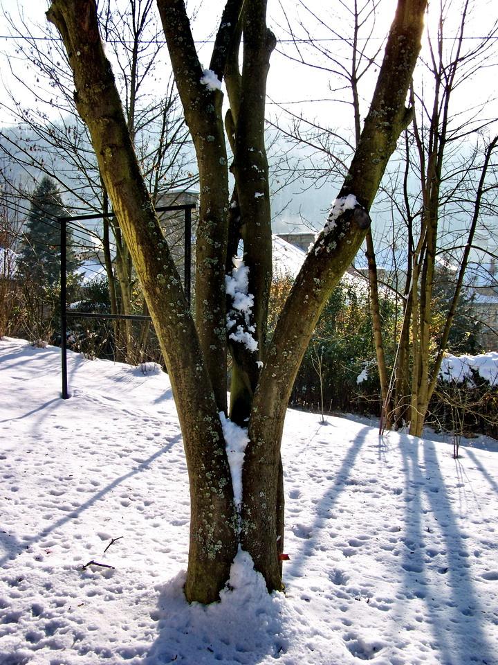fák és bokrok, többségben az erő